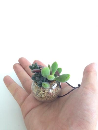 多肉植物,観葉,観葉植物,emv,岡山,エミュ,eMV